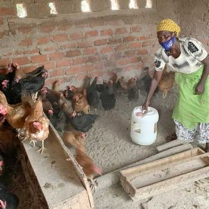 Alice Bonabana, a member of Kyamugenyi Kweterana, feeds the chickens that are helping the group to become self-sustainable.