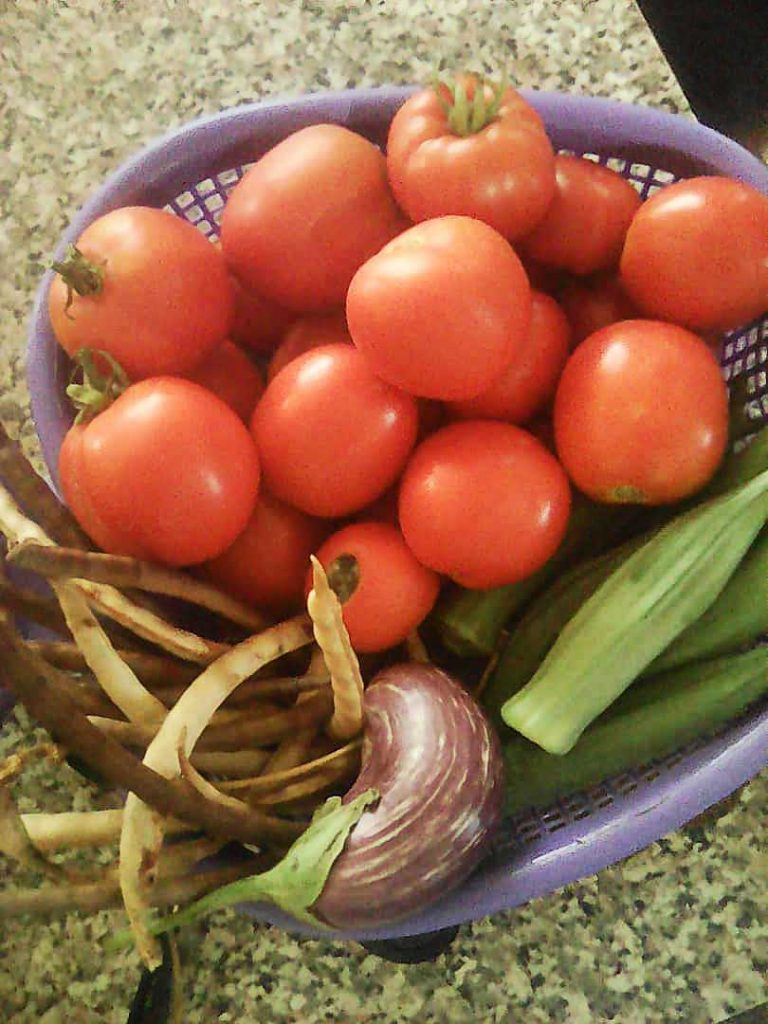 The sisters were overjoyed with their garden harvest, which included tomatoes, eggplant, green beans and okra.